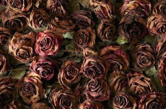 death-of-10000-roses-07